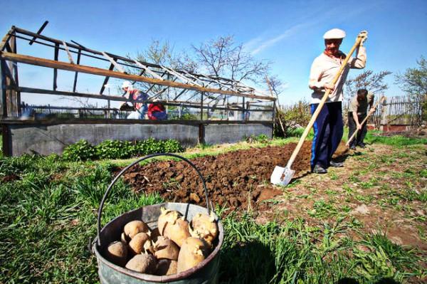 Ю.В. Афонин: Закон о садоводстве должен облегчить жизнь дачникам, не создавая им новых неудобств