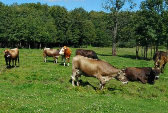 В Калужской области убивают фермерские хозяйства